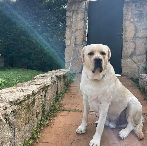 Noelia Serrano avatar