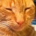 Tillytom Jones's profile image