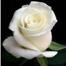Beatrice Monreal's profile image