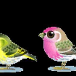 shakil Rana
