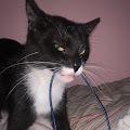 Makale Smile's profile image