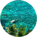 Image Google de jc-céline-enzo-tom canon