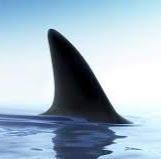 Sharkgen