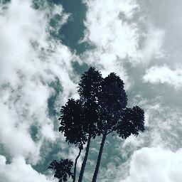 Alaya Taiye Abdullahi