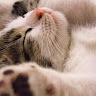 PandaSuicide Gar