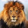 İmparator Aslan Profil Resmi