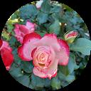 Cait Rose