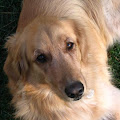 Abbie Dwire's Profile Picture