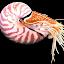 Nautilus 211