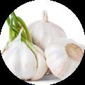 Garlic Lover