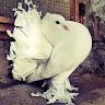 Umfur Feathers