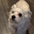 Shelby Lynn's profile image
