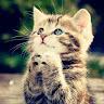 Кошка Матроскина
