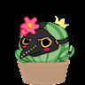 User image: Zoeh Cactus
