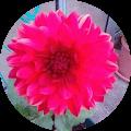 Photo de profil de Bonjour Vous