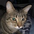 Brittyn The kitten's profile image