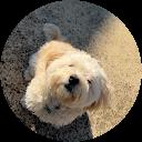 Giannis Loizou