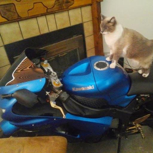 jinxx rider636