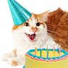User image: Birthday