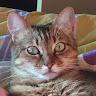 Bohdan Cat