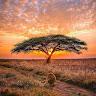 Viva La Madre Africa Y Su Música Hermosa