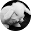 Reos Crafty Creations