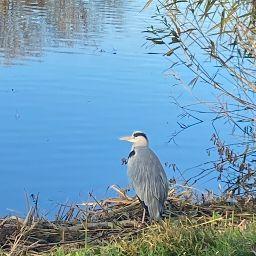 Таисия Вяхирева picture