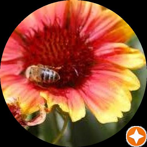 Honeybee Fields