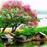 Phuong-le-thanh