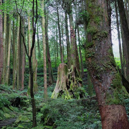 yunyu SHIH