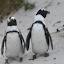 Der Pinguin
