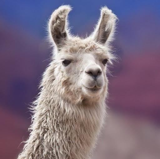 Timo Lu