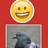 PigeonCam