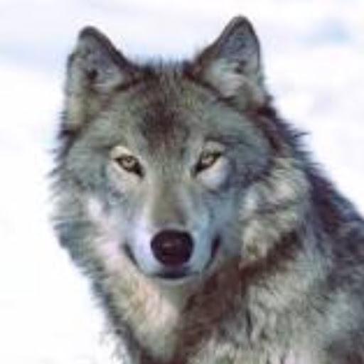 User image: Wolfvuki