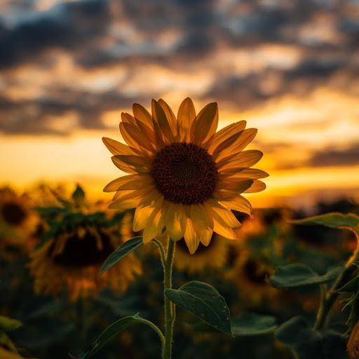 Nazira Rezky Afifah