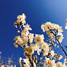 flower618