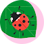Midas Dental