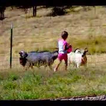 Marmar Goat Lady