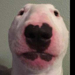 Walter the dog
