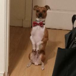Lucía Echavarri avatar