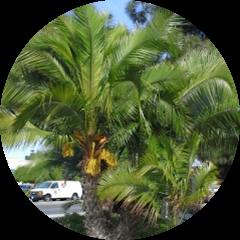 Palm market Avatar