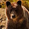 Рисунок профиля (Русский Медведь)