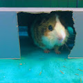 Piggy paradise 07's profile image