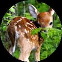 Photo of Bambi Rutledge