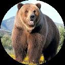 Armenian Bear - C.G.