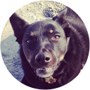 TickCheck Customer Review from Zuzu Cordelia