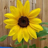 Carla Psalms23's profile image