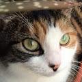 Kait Kat's profile image