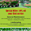 Paradise Lawn & Landscaping LLC Services