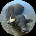Duncan Buffalo